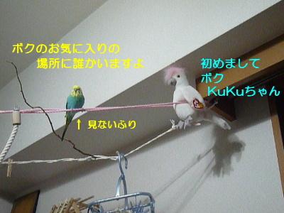 b0062090_2262472.jpg