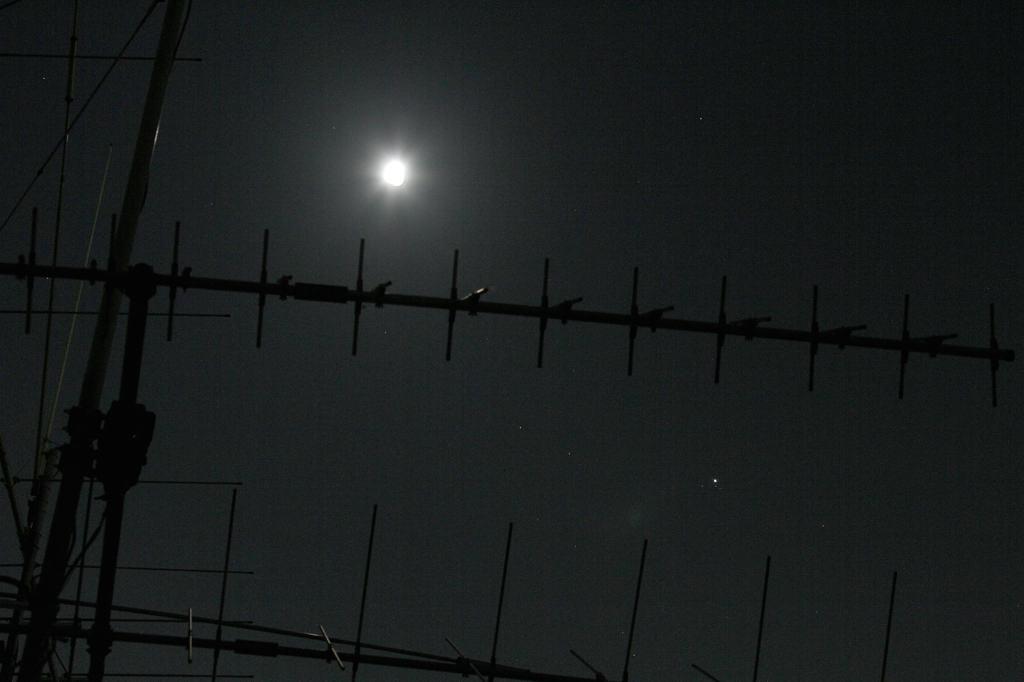ハクセキレイの飛翔姿/月と木星_b0024798_4424232.jpg