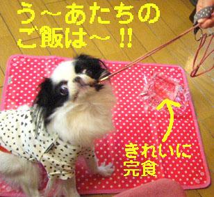 岡崎おさんぽ_c0199014_1018637.jpg