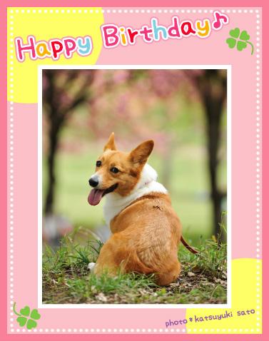 小梅ちゃん、お誕生日おめでとう♪_d0102523_12202284.jpg