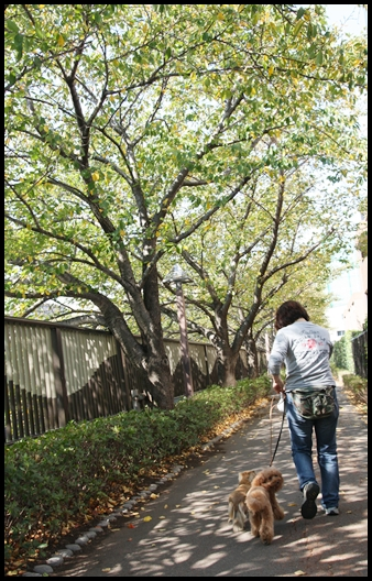 Maruと中目黒に行く。Yuzuも行く。_e0191026_21321030.jpg