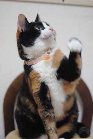 三毛猫三昧~_f0166234_0571991.jpg