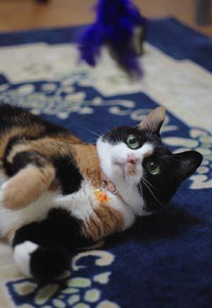 三毛猫三昧~_f0166234_0574942.jpg