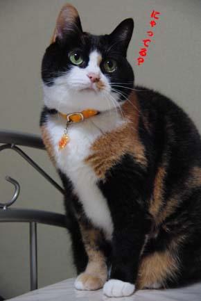 三毛猫三昧~_f0166234_0582531.jpg