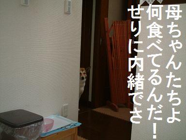 c0164353_2153789.jpg