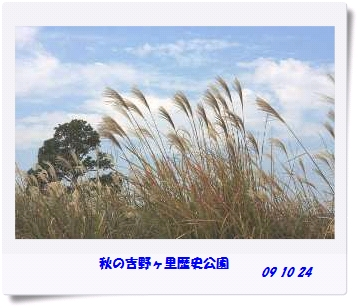 b0091865_0364849.jpg
