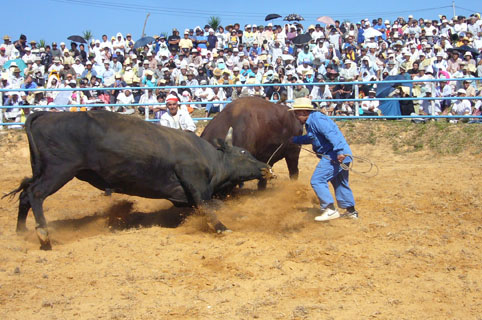 bull fighting._c0153966_20582015.jpg