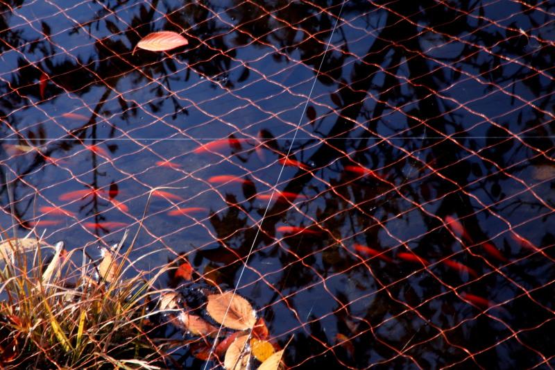 遠野不思議 第六百六十一話「松崎の水車小屋その2」_f0075075_12555136.jpg