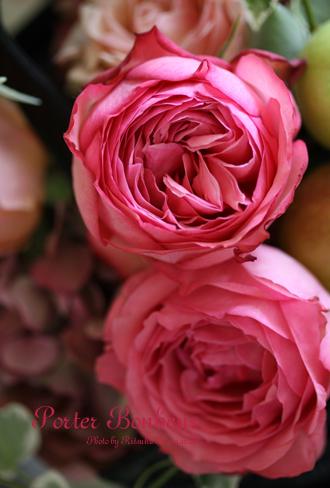 マカロン色のバラ MPカップ_f0127281_13594182.jpg