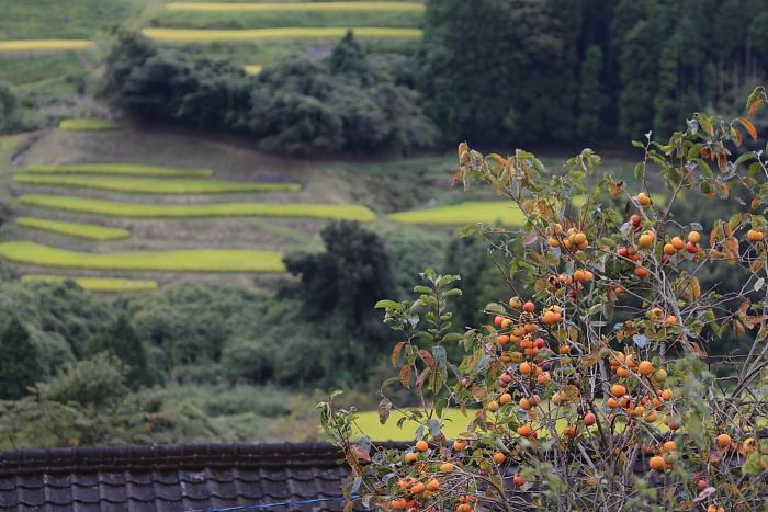 秋の便り_e0135098_094072.jpg