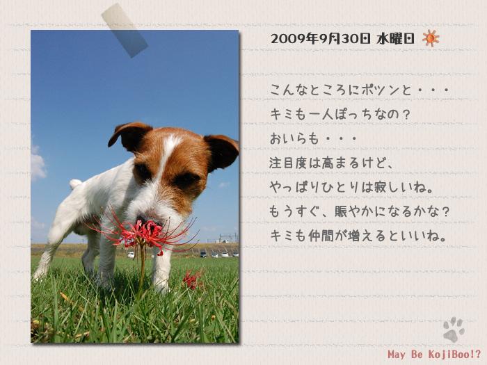 b0040323_0585890.jpg