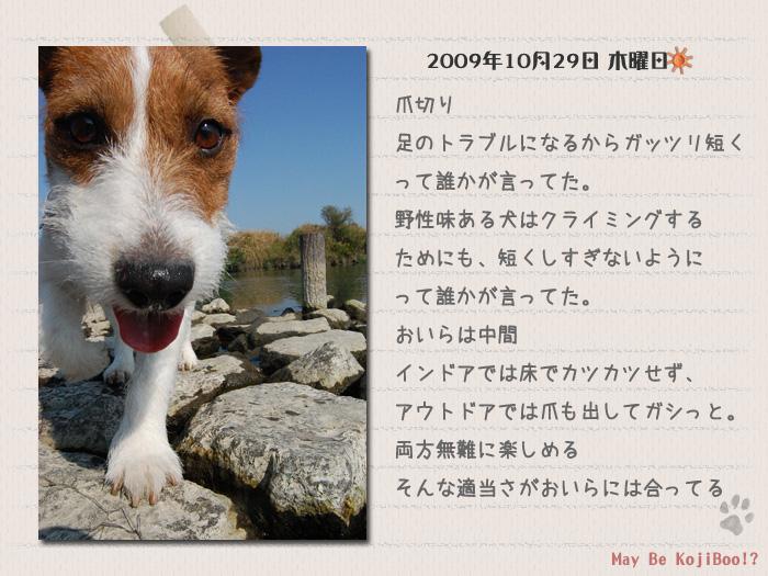 b0040323_103759.jpg