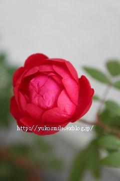c0178855_1442671.jpg