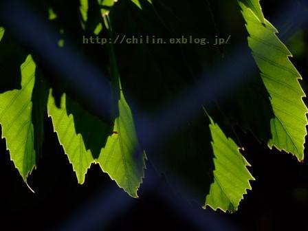 …♪_e0003966_16615100.jpg