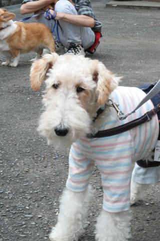 犬のパン屋さん_c0070377_21125941.jpg