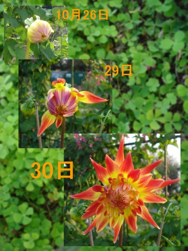f0165677_20551640.jpg