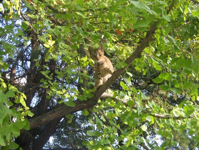 木登り猫_b0057679_856449.jpg
