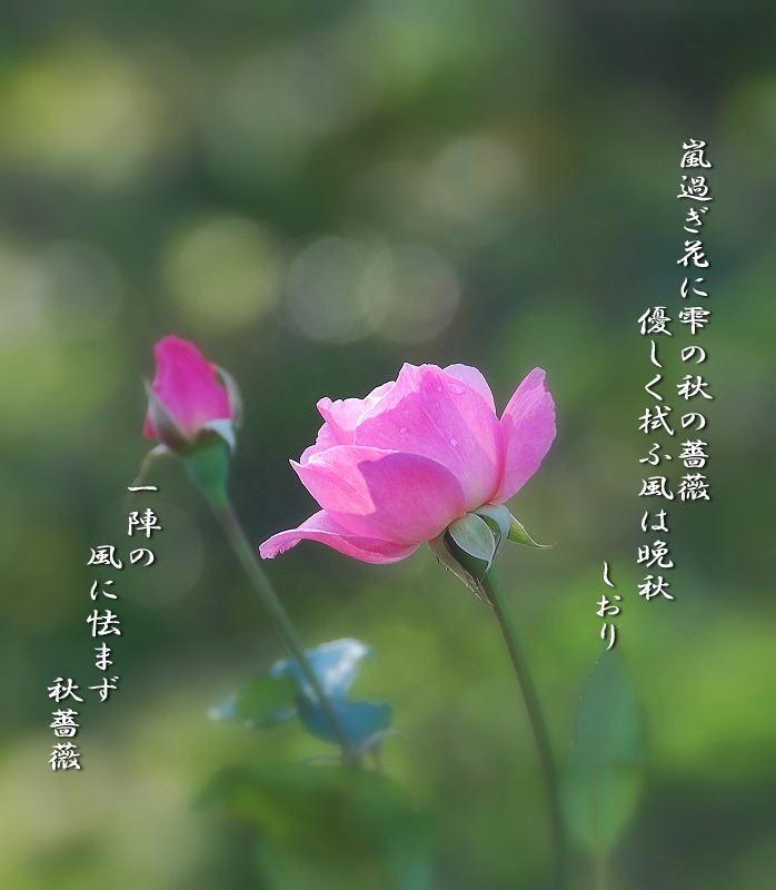 c0187781_104043.jpg