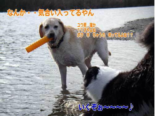 b0145486_20292136.jpg