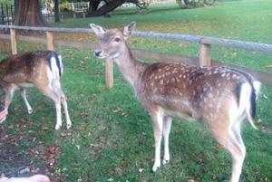 ロンドンの秋景色 Golders Hill Park _e0030586_7335583.jpg