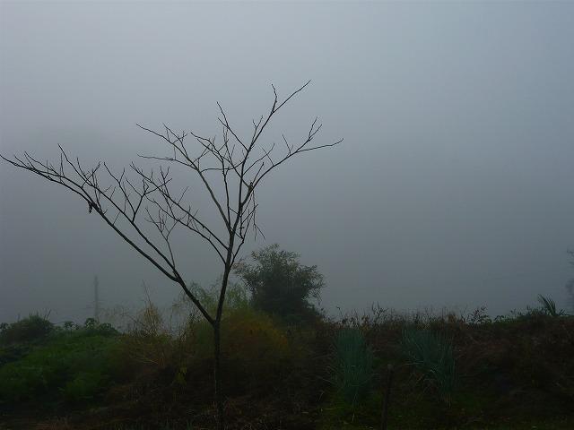 霧の朝_c0165589_156471.jpg