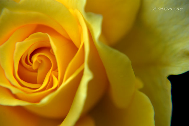 秋のバラ_f0147895_071841.jpg