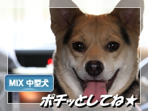 にほんブログ村 犬ブログ ミックス犬へ