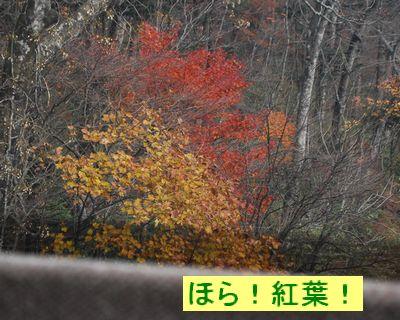 f0109202_20105888.jpg