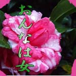 d0095910_6341251.jpg