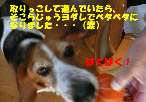 f0121712_4482675.jpg