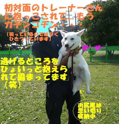 f0121712_921873.jpg