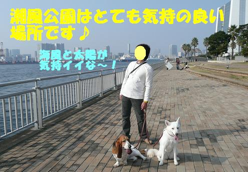 f0121712_9355100.jpg