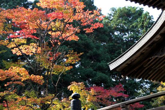 神護寺2_e0048413_2273987.jpg