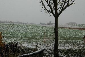 初雪です!_f0096216_952281.jpg