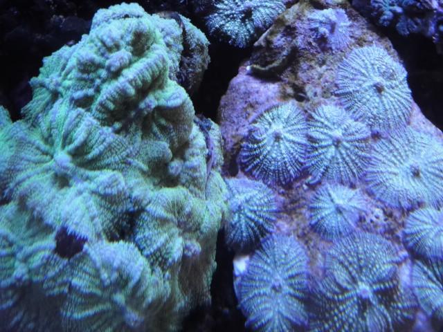 海水魚・サンゴ_f0189122_11353055.jpg