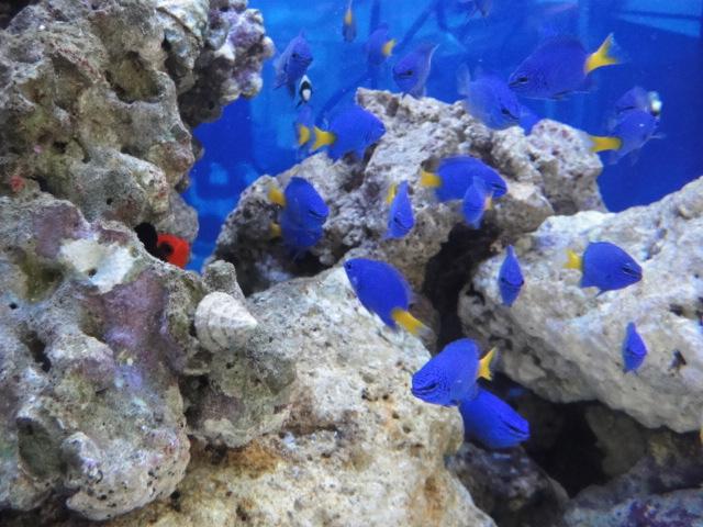 海水魚・サンゴ_f0189122_1135640.jpg