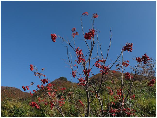 大きな秋、見つけに_c0042324_21261213.jpg