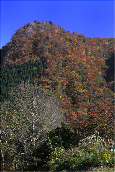 大きな秋、見つけに_c0042324_21325892.jpg