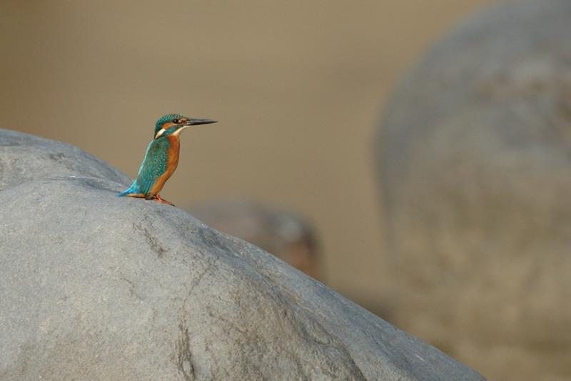 河原の野鳥たち_d0099854_21213934.jpg