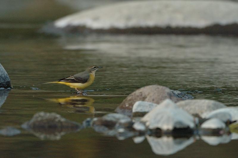 河原の野鳥たち_d0099854_21252526.jpg