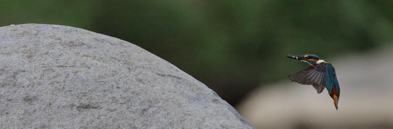 河原の野鳥たち_d0099854_21272147.jpg