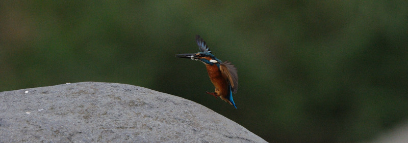 河原の野鳥たち_d0099854_21275749.jpg