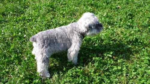 11月1日は犬の日だワン。_b0182969_2359132.jpg