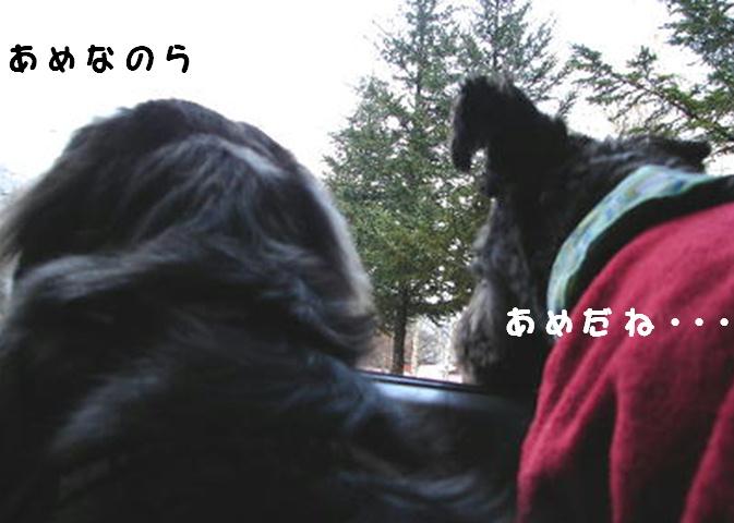 f0195891_11461938.jpg
