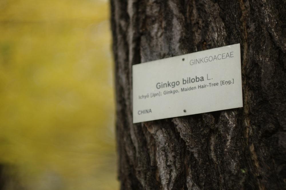 しばしこの木の写真を_f0042194_23261954.jpg