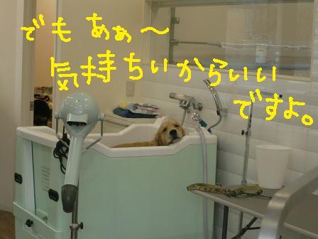 f0176830_20224667.jpg