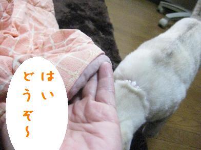 b0151748_1323562.jpg