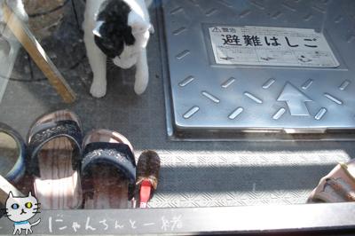 腰抜け猫_e0031853_1473244.jpg