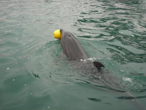 イルカとボールで遊んだでちゅ~~♪♪♪_e0123286_18185273.jpg