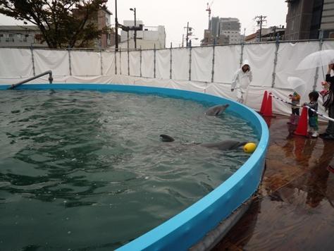 イルカとボールで遊んだでちゅ~~♪♪♪_e0123286_1819734.jpg